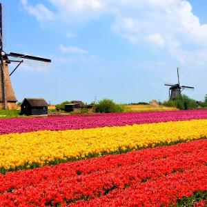 Стипендии для иностранных студентов в Нидерландах